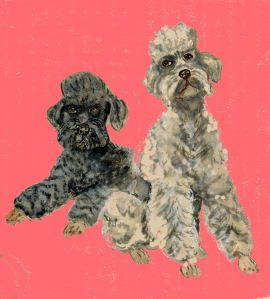Two Poodles0005
